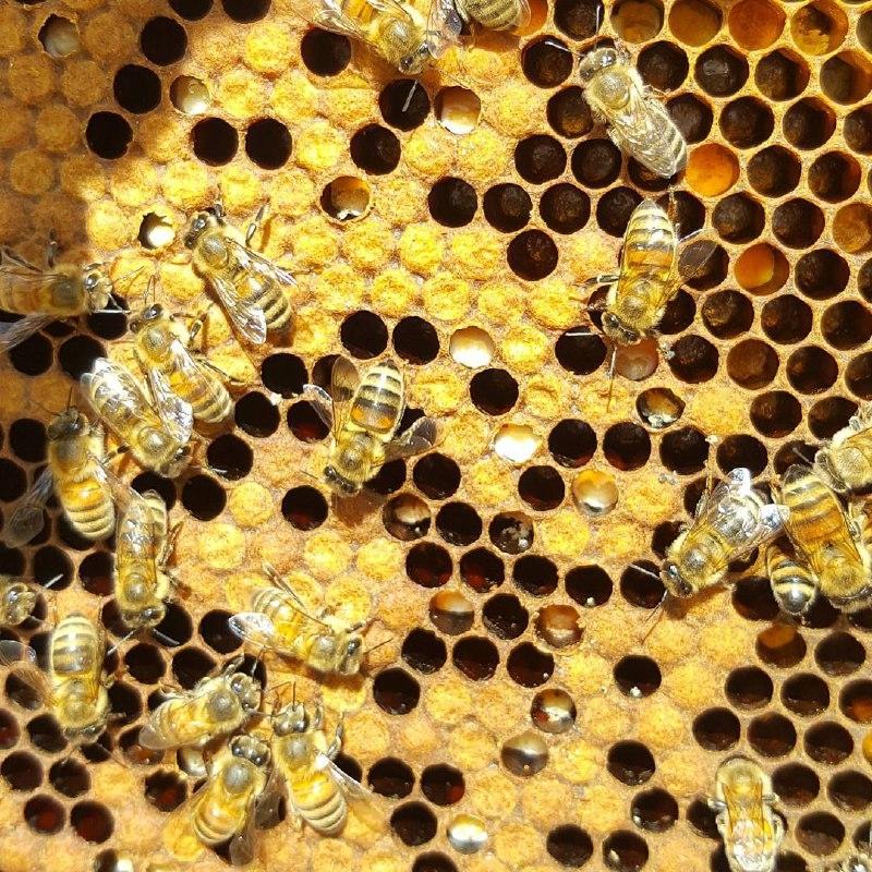 Varroa Mite Treatment Comparison