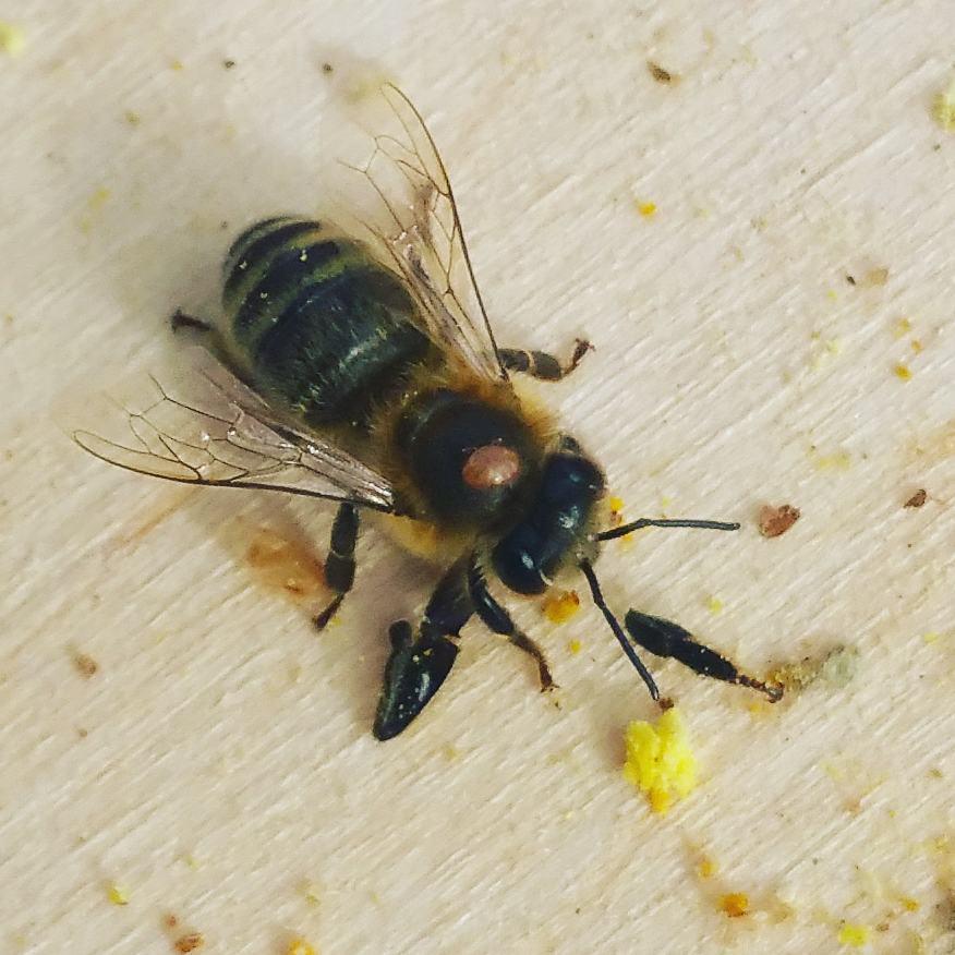 Beekeeping in August 2020