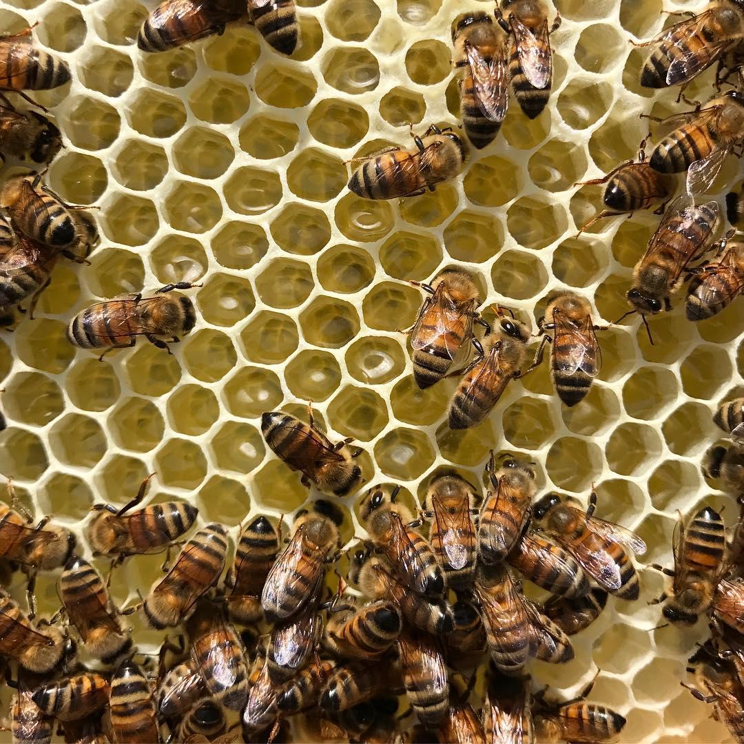 honeycomb wax producing