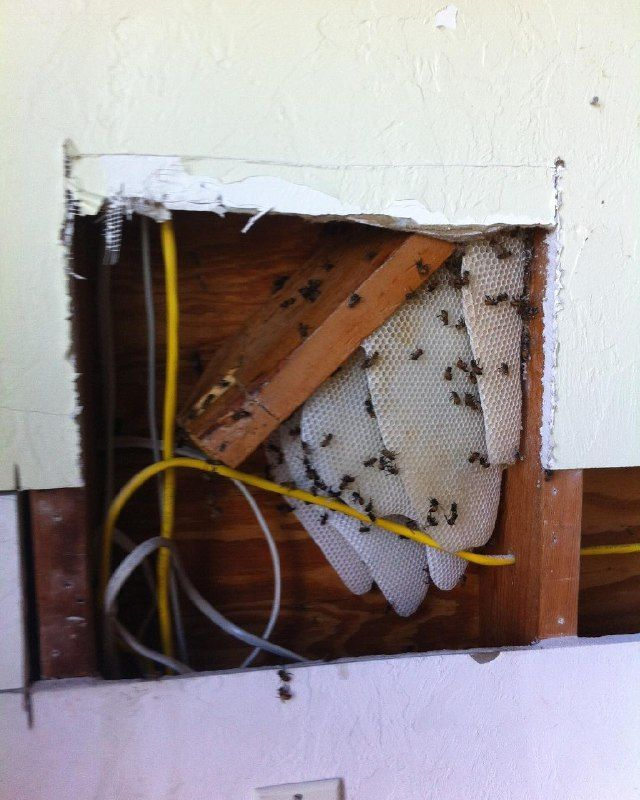 bee hive removal cost