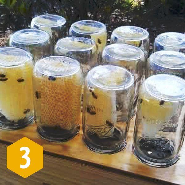 Mason Jar Beehive Harvest