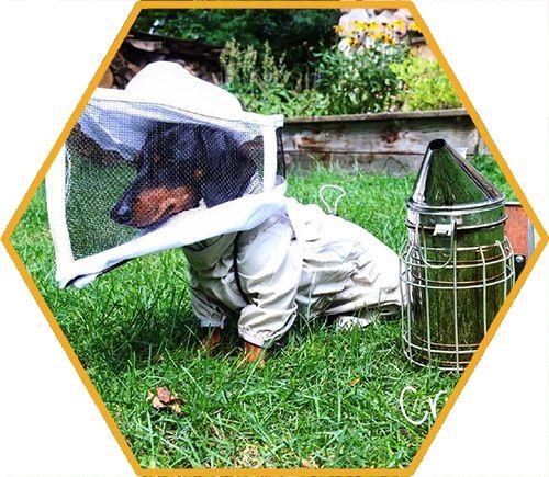 crusoe beekeeping dog celebrity dachshund