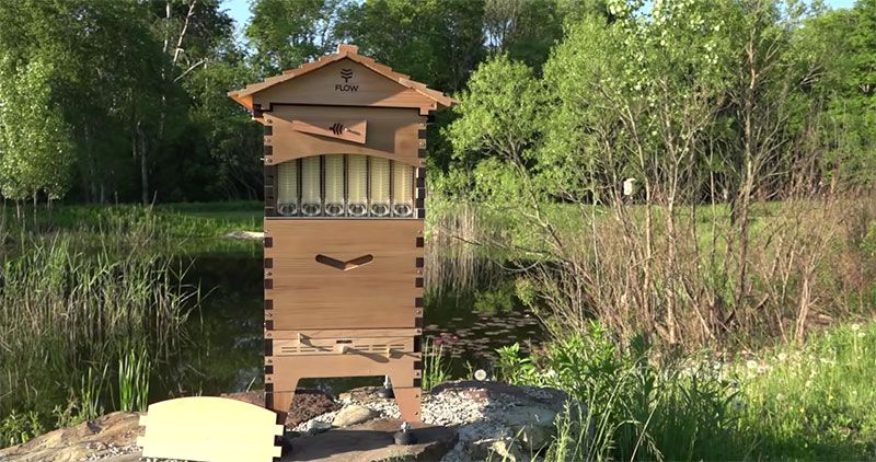 beehive kits with tap