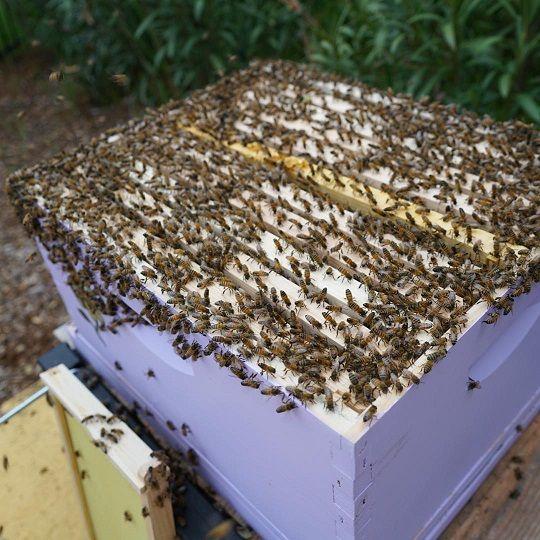 catch a swarm