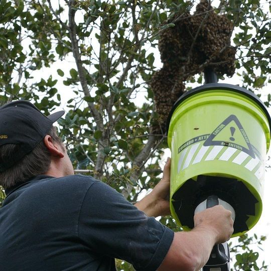 how to get rid of bumble bee nest