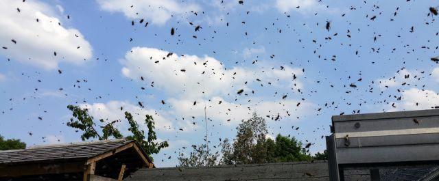 bait hive lure