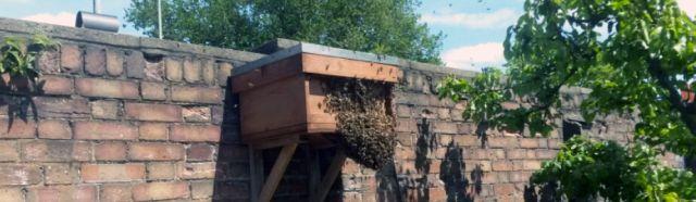 bait hive plans