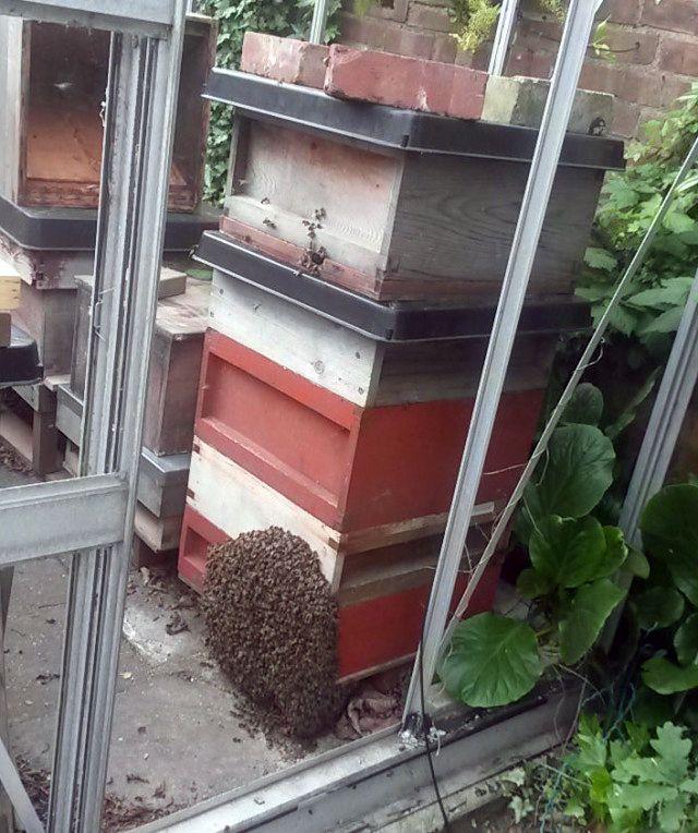 carpenter bee bait
