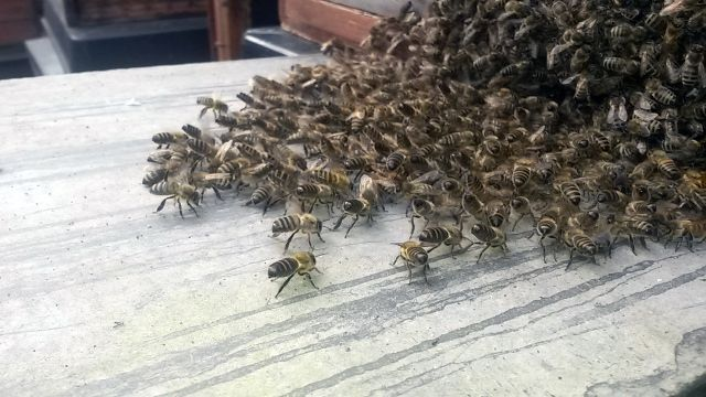 what time of year do bees swarm